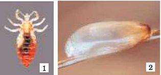 parazita organizmusok termelnek csepp emberi paraziták ellen